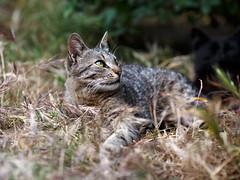Street cat 134 (Yalitas) Tags: pet cats cat canon kat feline chat kitty gato felino katze katzen kot kedi kass gatta streetcat kotka  kocka  katte  katzchen kottur catmuzzle