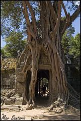 Arbol en Ta Som (Mar Santorio) Tags: tree d50 arbol nikon cambodia siemreap camboya