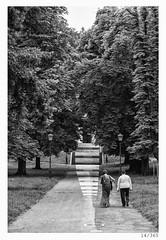 Stairway to Heaven (Alja Ani Tuna) Tags: trees blackandwhite bw woman white man black walking nikon couple day 14 year ljubljana nikkor f18 avenue dailyphoto d800 85mmf18 project365 onceaday 14365 nikkor85mm photo365 nikond800