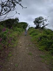 A Walk to Saundersfoot (deadmanjones) Tags: footpath foxgloves striding zjlb