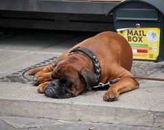 mail-dog (gabriele.pratesi) Tags: dog warm