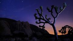Joshua Tree at Night (arthurcauty) Tags: california longexposure sky mountain night dark stars star nationalpark desert joshuatree nightsky ryanmountain joshuatreeatnight arthurcauty