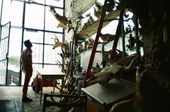 (Marco Antonecchia) Tags: skull taxidermy contax antelope fujifilm t2 contaxt2 fujicolor agostinelli