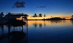 DSC_0301 (jirikoo) Tags: ocean flowers blue sea france beach water coral french island volcano polynesia shark boat sand pacific crystal stingray peak lagoon palm canoe exotic southpacific tahiti bounty tropics borabora moorea polynesian frenchpolynesia