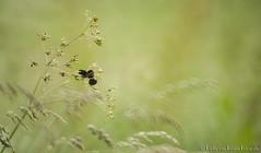 Green and Grassy (PvRFotografie) Tags: holland green nature vintage mirror rotterdam groen minolta nederland natuur 500mm rotterdamzuid vintagelens rotterdamcharlois sonya900 minoltaaf500mmf80reflex