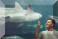 Tiburones (cibehso) Tags: acuario tiburon tiburones asesinos marinos marionos