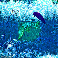 When Jack found a dead leaf (Lemon~art) Tags: blue shadow tree green bird texture nature woodland leaf manipulation stump learning duotone confusion jackdaw