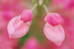 Spring Garden (pallab seth) Tags: park england flower macro london nature garden spring dof blossom bokeh outdoor petal bloom barking signofspring springgarden 2016 barkingpark samsungnx1 samsung60mmf28macroedoisssalens