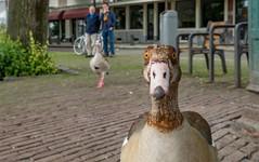 Got a new camera ? (Jorden Esser) Tags: street portrait closeup rotterdam funny goose curious delfshaven nederlandvandaag