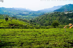 B E A U T Y (Sathish Photographs) Tags: life trip morning travel blue trees plants mountain cold green nature colors beautiful beauty clouds photography bush exposure estate tea top awesome ngc culture hills experience western eco tamilnadu ooty hillstation ghats greeny