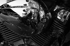 Drosseln sind Vgel, sie in Motorrder zu stecken ist Tierqulerei! (Knarfs1) Tags: bw bike mirror spiegel harley chrome motorrad