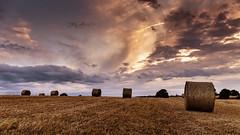Sunset on golden field (Enrico Cusinatti) Tags: travel sunset sky italy cloud nature clouds italia tramonto nuvole nuvola natura piemonte cielo minimalismo albero viaggi vacanze nubi canoneos6d oradorata