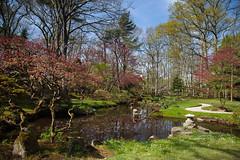 clingendael-7741 (Arie van Tilborg) Tags: japanesegarden hague thehague clingendael japansetuin clingendaelestate landgoedclingendael arievantilborg