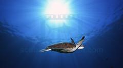 2012 11 METTRA OCEAN INDIEN 4788