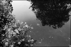 Reflections (emmajanefalconer) Tags: london water monochrome canal eastlondon