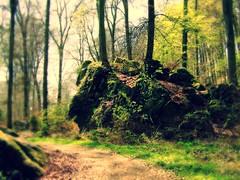 Mystischer Wald (Basinbah) Tags: wasserfall cascade sandstein mystisch felsen teufelsschlucht irrel felssturz