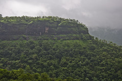 Sahyadri during monsson (somabrata) Tags: travel forest trek village exploring monsoon maharashtra pune southindia sahyadri bhimashankar westernghat trekkinginpune monsoontrekking