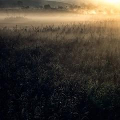 Windtalkers (warmianaturalnie) Tags: morning mist reed nature fog sunrise reeds landscape poland sunrays warmia windtalkers
