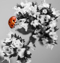 Ladybird Desat (londieone) Tags: pink red flower macro nature lady bokeh insects ladybird