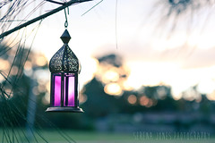 Lantern (Serena178) Tags: light tree pretty purple bokeh lantern handing odc