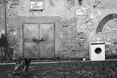 Cani, Arcivescovi, vendite E Indesit (bebo82) Tags: blackandwhite bw dog house cane square casa pentax piazza washer biancoenero lavatrice falvaterra pentaxk20d pentaxk20 pietrobenedetti