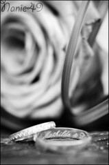 Alliances. (nanie49) Tags: wedding portrait france flower fleur rose nikon flor boda nb bn ring mariage francia matrimonio anillos bagues 150mm alliances d7000