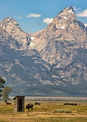 Booking it to the outhouse (Patty Bauchman) Tags: mountains nature landscape wildlife wyoming outhouse tetons bison grandtetonnationalpark historicbuilding mormonrow