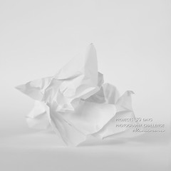 day 2. Pure White (Kemerova) Tags: blackandwhite stilllife white contrast project square bulgaria squareformat conceptual plovdiv 30day 2013 kemerova