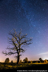 Old tree under the Milky Way, Leicestershire (J. Brown Photography) Tags: old brown tree abbey night way stars photography james photo long exposure launde leicestershire sony astrophotography alpha milky