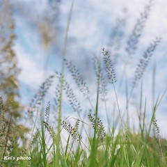 (k) Tags: autumn 6x6 film hasselblad500cm portra160