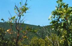 1481_Montenegro 2013_Zaliv Traste_Nikon F801_08-01d_704 (nefotografas) Tags: trip wild vacation color film beach lens iso100 nikon tokina agfa expired montenegro 032005 70210mm f801 zaliv traste