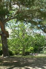 Алупкинский (Воронцовский) парк