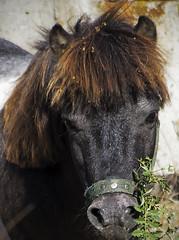 (katunchik) Tags: nature natur fringe bulgaria pony priroda bulgarie   bulgarien bulharsko primorsko