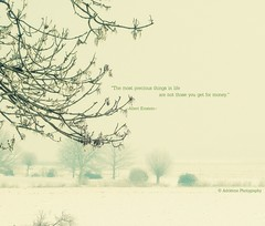 precious (♥Adriënne - catching up......) Tags: trees mist fog terneuzen natuurreservaat margarethaplein winterinthenetherlands margarethapolder addyvanrooij ♥adriënne panasonicfz150
