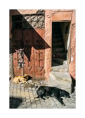 Morocco - Marrakech (Sr. Cordeiro) Tags: street sun sol dogs nikon shadows morocco marrakech ces medina rua nikkor v1 sombras vr marrocos marraqueche 1030mm
