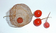 physalis (alanpeacock2) Tags: red orange flower berry physalis chineselanterns
