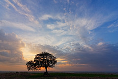 Israel (Hemo Kerem) Tags: sunset tree field clouds israel day cloudy sony explore alonetree tokina1116mmf28 sonya77 mygearandme mygearandmepremium {vision}:{mountain}=0888 {vision}:{sunset}=0635 {vision}:{clouds}=099 {vision}:{sky}=099 {vision}:{outdoor}=098