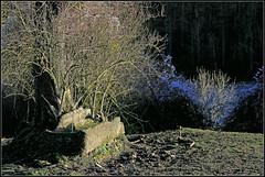 Vieux bac, dans les bois d'Ouffet, Condroz, Belgium (claude lina) Tags: nature automne belgium belgique promenade mont comblainaupont condroz ouffet