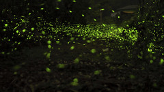 (Bohuei) Tags: ex canon photography eos landscapes dc f14 taiwan sigma  firefly  2014 30mm   hsm 650d danboard