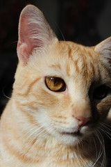 L'occhio del gatto (nicolaborzi) Tags: cat kat chat o gato katze mace cath 猫 macska gatto חתול kot gat kočka kedi kass 貓 katt kato kissa köttur mačka kucing pusa mèo paka گربه кошка 고양이 cattus katu katė γάτα miv feles pusi kaķis мачка котка मांजर pisică แมว قط பூனை ngeru nran կատու pişik qattus кішка बिल्ली муур بلی పిల్లి קאַץ বিড়াল ಬೆಕ್ಕು ឆ្មា બિલાડી ਬਿੱਲੀ
