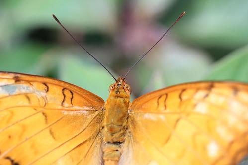 Butterflies Live! 2014 at Lewis Ginter Botanical Gardens in Richmond, VA