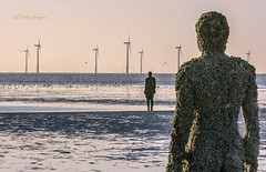 Suit from Crustaceans (alundisleyimages@gmail.com) Tags: sea sculpture art beach nature weather birds statue liverpool barnacles windfarm crosby crustaceans merseyside anthonygormley anotherplace burbobank