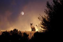 Testigo de luna (Juan Pedro Gómez-51) Tags: moon cat luna gato horus felino bastet udjat aun catonroof abigfave gatoentejado
