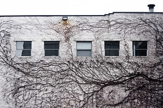 Vine Lines Building Wall (Orbmiser) Tags: windows winter building wall oregon portland vines nikon d90 55200vr