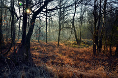 Into the woods... :) (anna.night) Tags: wood morning las trees winter light brown sun color tree green nature colors beautiful grass mystery forest sunrise ginger woods nikon branches magic meadow poland polska natura zima bagna gazie d7000