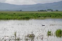 marsh4 (ralphsplitter) Tags: county nature centennial idaho marsh camas