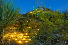 Sonoran Light: Field of Light (breese76) Tags: nightphotography arizona lightpainting phoenix paintingwithlight phoenixarizona desertbotanicalgarden brucemunro breese76 sonoranlight