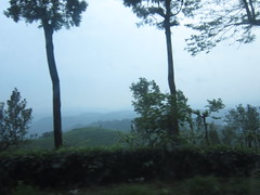 Munnar 076.JPG (invisibleindian2001) Tags: munnar