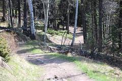 Time to head down the trail from venting ridge (davebloggs007) Tags: canada creek kananaskis ridge alberta venting prarire