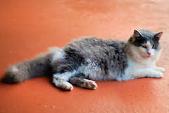 Eris (Larah McElroy) Tags: pictures cats animal animals cat photography kitten feline picture kitty kittens photograph kitties felines mcelroy larah larahmcelroy